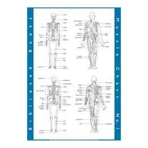 : The Muscle Chart: No. 1 (small) (9781873017302): Paul Blakey: Books