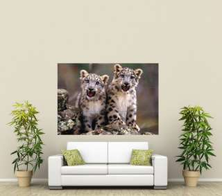 Snow Leopard Cubs Giant Poster Print X980