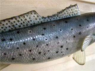XL Big Speckled Trout Fish mount replica for sale 6lb+