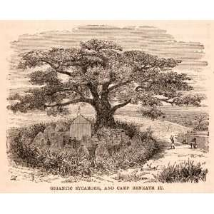1872 Wood Engraving Africa Sycamore Camp Village Hut