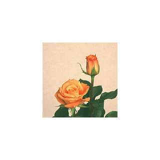 200 Premium Long Stem Roses Orange Patio, Lawn & Garden