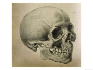 Illustration of the Skull of a Bushman of the Hottentot Tribe Africa