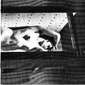 Norman Zammitt recent work March 31 April 26, 1969