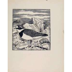 Ringed Plover Limited Printed Edition Artist Editorial