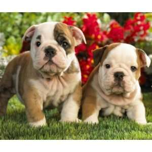 Cute Bulldog Puppy Dogs in Flowers Mousepad Office