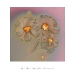 Amy Trebella   Ghost Flowers II Canvas